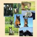 引退馬協会フォスターホースポストカードセット