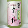 五条川桜2011