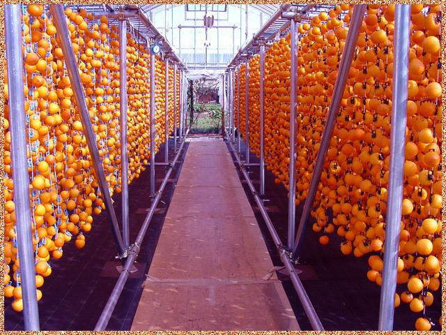 市田柿の干し柿作り