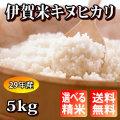 【H29年産】 伊賀米キヌヒカリ 玄米5kg【送料無料】【精米無料】【米ぬか無料】【分づき米対応】