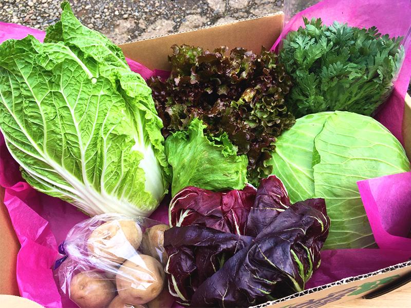 【送料無料】 ひぐらし農場:野菜詰め合わせセット