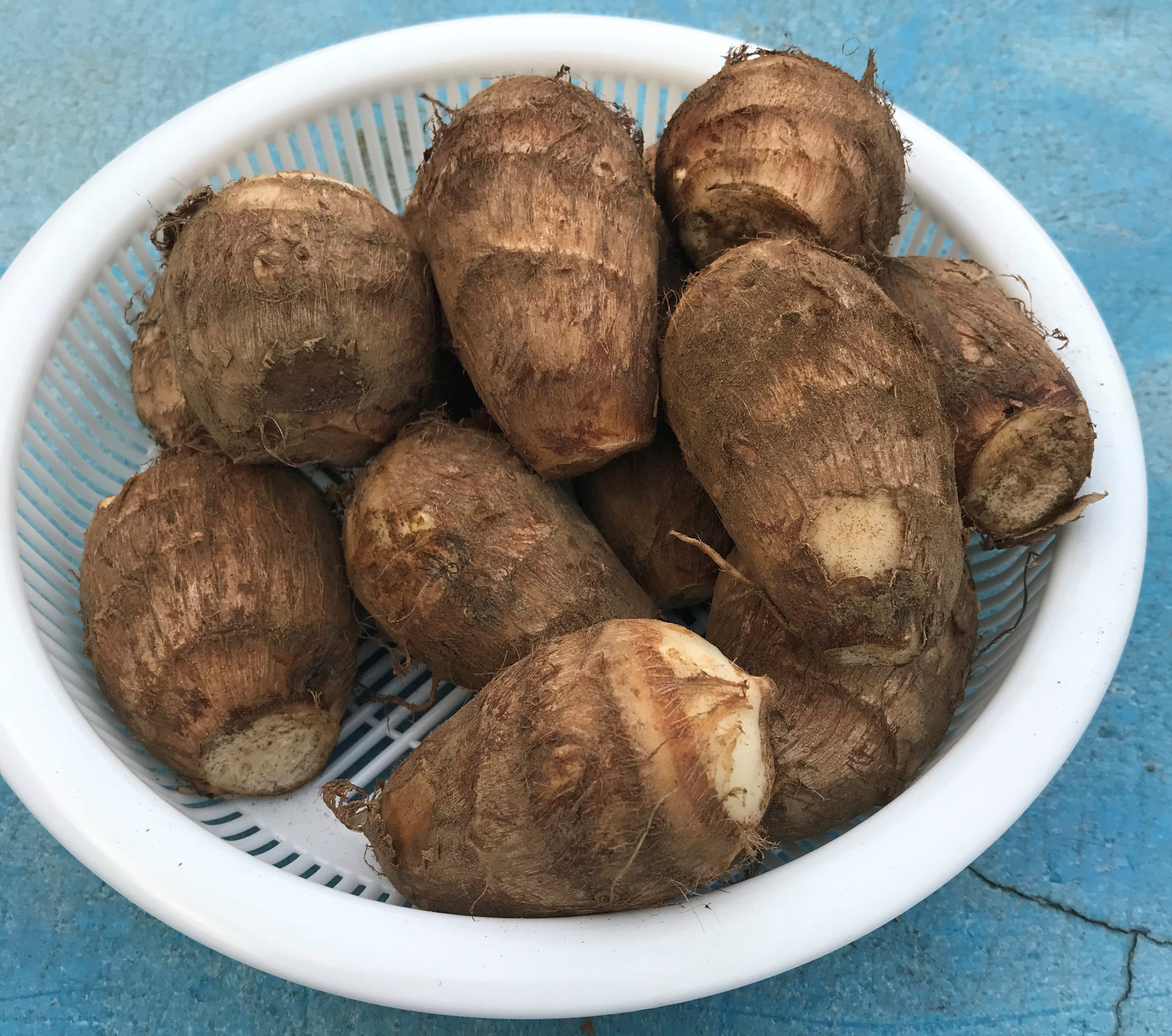 【信州の伝統野菜】坂井芋(さかいいも) Mサイズ(40-70g級) 1kg