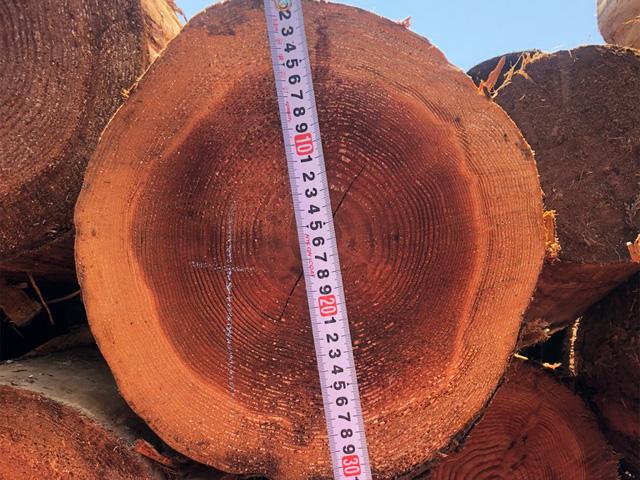 杉の大丸太 皮付き