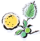 画像:かぼす、梅、しそ