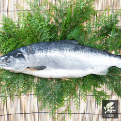 北洋産 極上紅鮭 [1尾約2.2kg前後] 【カタログ品番481】