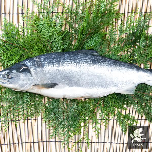 北洋産 極上紅鮭 [1尾約2.2kg前後] 【カタログ品番481-482】