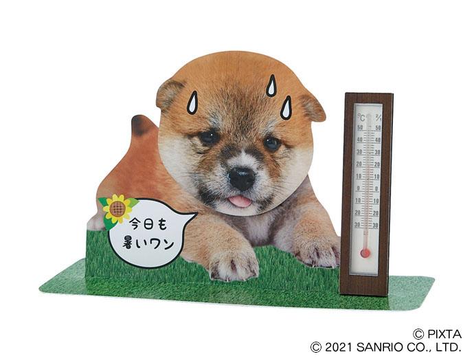 温度計付き暑がる柴犬