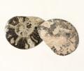 アンモナイト 化石 ペア No.23
