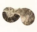 アンモナイト 化石 ペア No.24