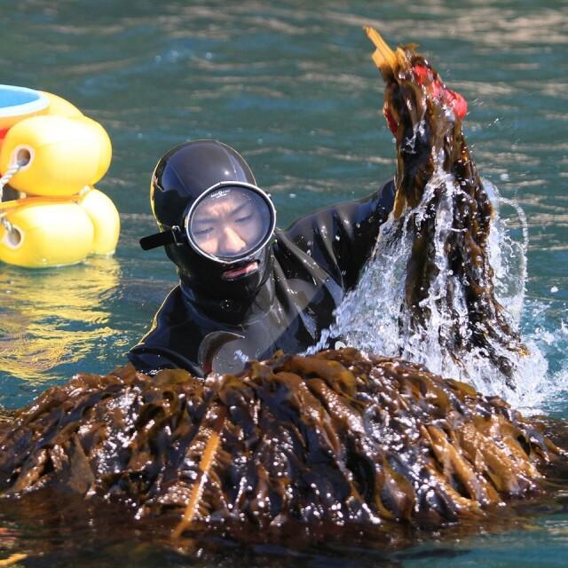 糸島の乾物 海藻 いとしま 海のサラダ【山下商店】