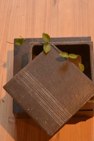 黒十草一段重箱17cm