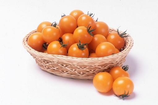 サカタシンディーオレンジ