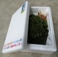 海ぶどう(生)500g 手摘み茎無し