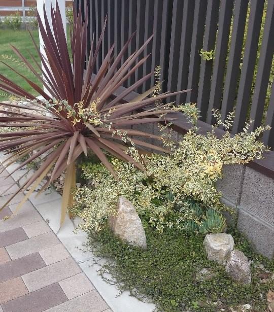 植栽例 ホープレイズ
