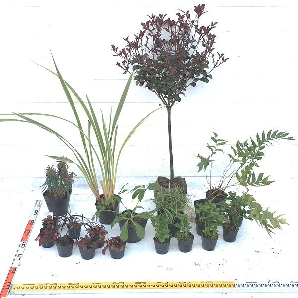 ガーデンセット 植木組合 オリジナル