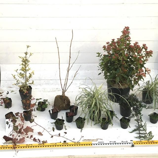 植木組合オリジナル ガーデンセット
