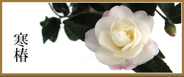 カンツバキ 白花 バナー