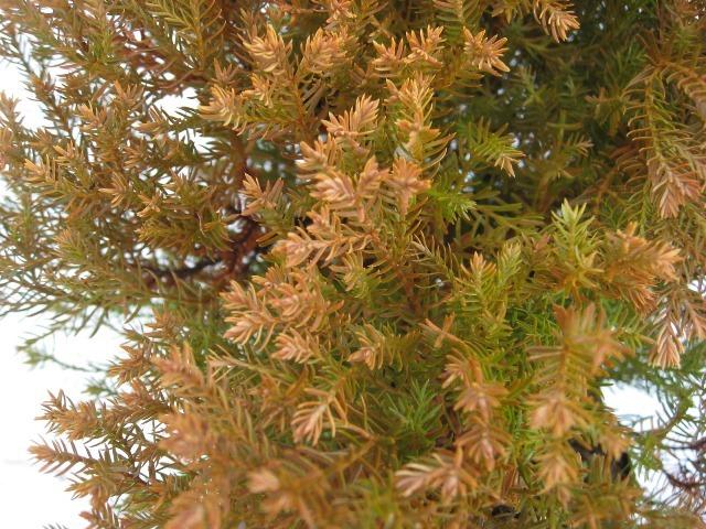 ラインゴールド 冬の紅葉