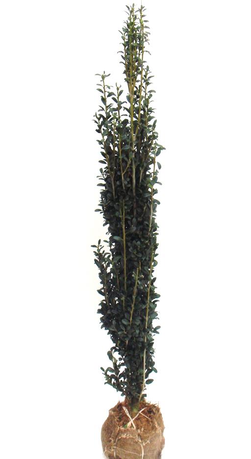 スカイペンシル1.2m
