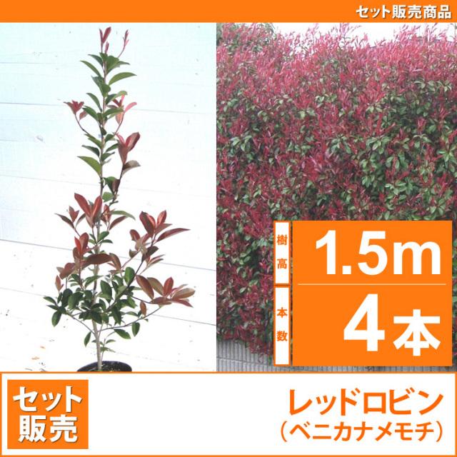 レッドロビン (西洋紅カナメ・アカメ)1.5m 4本セット販売 【業者仕入向け】