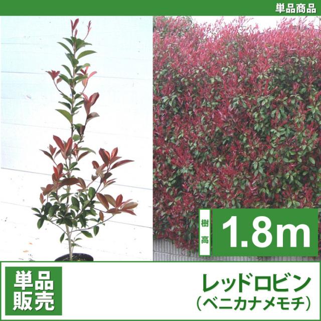レッドロビン (西洋紅カナメ・アカメ)1.8m 単品 【業者仕入向け】