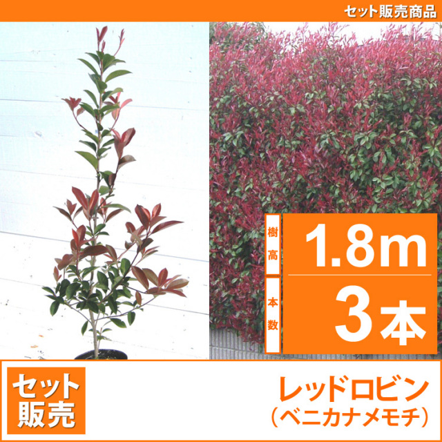 レッドロビン (西洋紅カナメ・アカメ)1.8m 3本セット販売 【業者仕入向け】