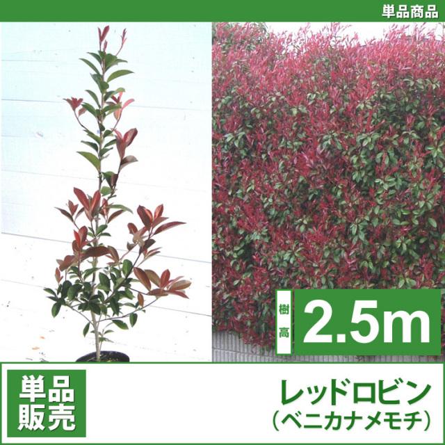レッドロビン (西洋紅カナメ・アカメ)2.5m 単品 【西濃運輸】 【業者仕入向け】