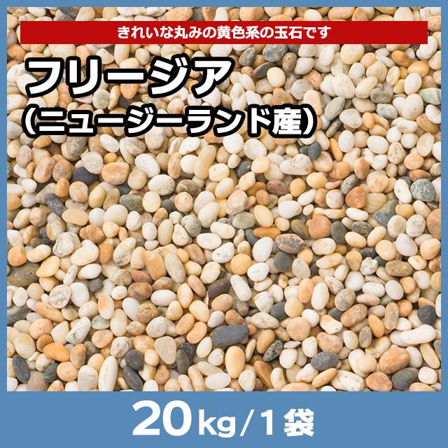 フリージア(ニュージーランド産) 20kg