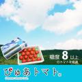 【送料無料】希少価値の高い夏のフルーツトマト・ぴゅあトマト【約0.8〜1kg(12〜20玉)】