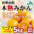 【送料無料】わけあり 木熟みかん(キズあり M~2S混合) 5kg