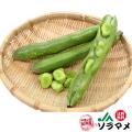 【送料無料】和歌山県JA紀南産 そらまめ 2kg 4月中旬より順次発送