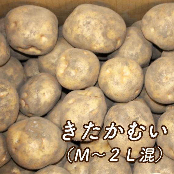 きたかむい(M~2L混)【送料込み・発送は11月上旬頃から】