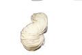 綿たこ糸 20/60x3(60号) 小カセ 610g (太さ:約4.5mm)