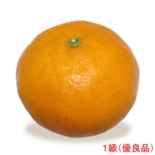 愛媛県産カラマンダリン(なつみ・果実・くだもの・オレンジ)の販売店