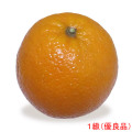 愛媛県産ブラッドオレンジ(果実・くだもの)の販売店