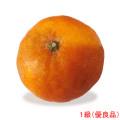 愛媛県産かんぺい(甘平・果実・くだもの・オレンジ)の販売店