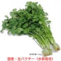 ハーブ野菜・生パクチー(コリアンダー・シャンツァイ・香菜)の販売店