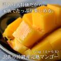 沖縄産完熟マンゴー
