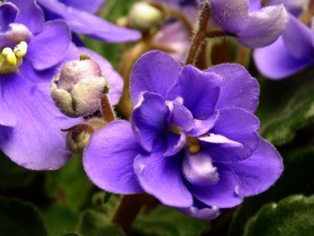 African Violet(アロマ/フレグランス/スティック/ディフューザ/香り/芳香剤/ジュリア/インテリア/ノーブルスパーク/エセンス)