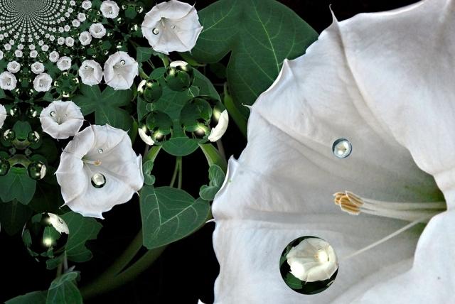 Angel Flower(アロマ/フレグランス/スティック/ディフューザ/香り/芳香剤/ジュリア/インテリア/ノーブルスパーク/エセンス)