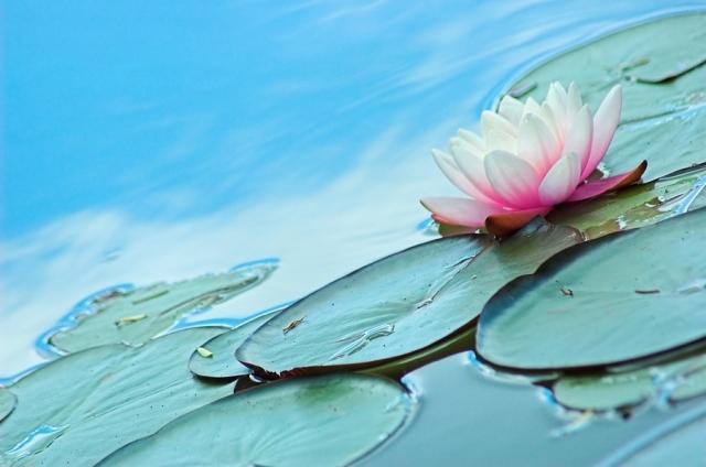 Aqua Lily(アロマ/フレグランス/スティック/ディフューザ/香り/芳香剤/ジュリア/インテリア/ノーブルスパーク/エセンス)