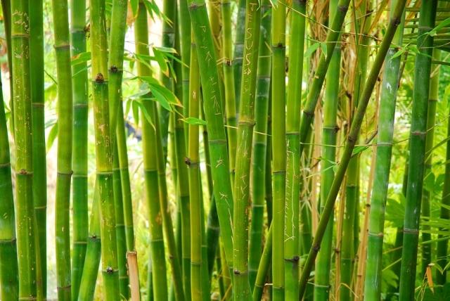 Bamboo(アロマ/フレグランス/スティック/ディフューザ/香り/芳香剤/ジュリア/インテリア/ノーブルスパーク/エセンス)