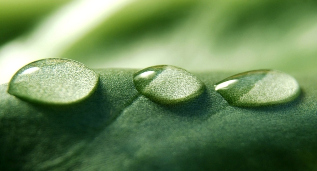 Morning Dew(アロマ/フレグランス/スティック/ディフューザ/香り/芳香剤/ジュリア/インテリア/ノーブルスパーク/エセンス)
