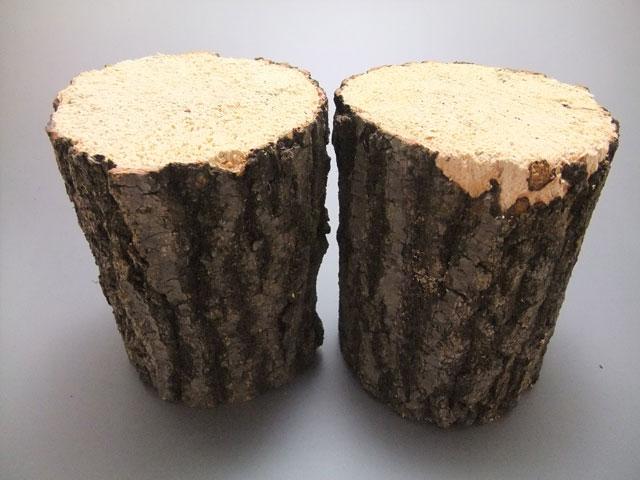 クヌギ産卵木Mサイズ