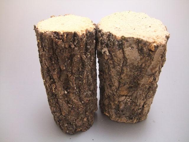 クヌギ産卵木Sサイズ
