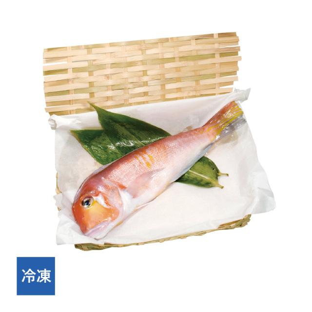 【冷凍】 若狭ぐじ(甘鯛)一汐 1尾[_216502_]