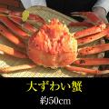 ずわい蟹・大蟹 大サイズ約50cm ≪11月6日解禁・期間限定≫保冷容器込み[_216901_]