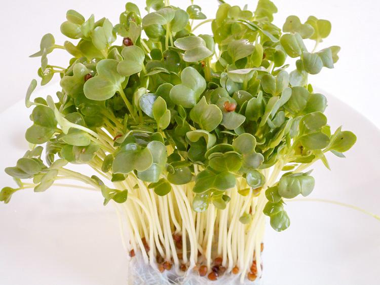 九州産かいわれ(市場野菜)【0.1kg】