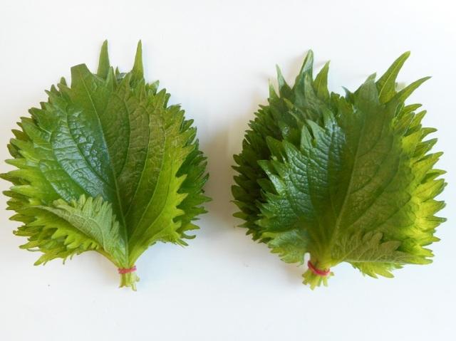 九州産大葉(青しそ)(市場野菜)【0.1kg】