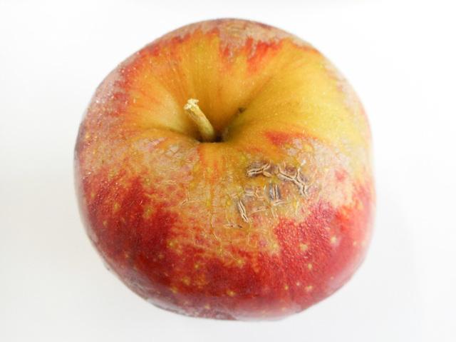 九州産 減農薬栽培・ノーワックス・キズあり・小さめの、りんご【0.3kg】